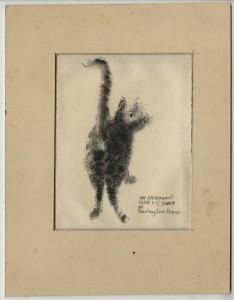 Brill Cat Hewes